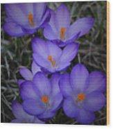 Seven Purple Crocuses Wood Print
