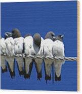 Seven Swallows Sitting Wood Print