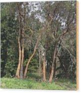 Seward Park Trees Wood Print
