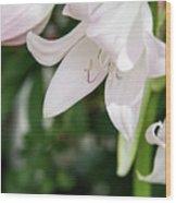Sexual Flower Wood Print