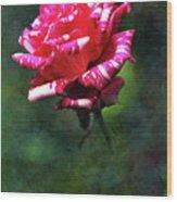 Sexy Rexy Rose Wood Print
