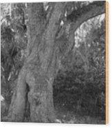 Kingsley Plantation Tree Wood Print