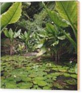 Seychelles Islands Pond Wood Print