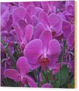 Sf Pink Flowers Wood Print