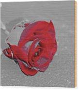 Sfscl00707 Wood Print