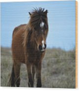 Shackleford Banks Pony Wood Print