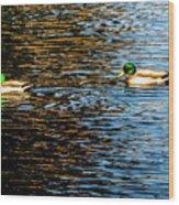 Shade And Sunlight - Mallard Ducks Wood Print