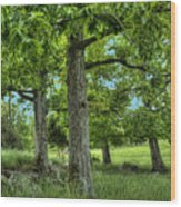Shade Trees Wood Print