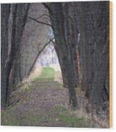 Shaded Walk Wood Print