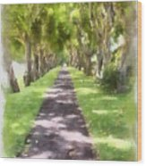 Shaded Walkway To Princeville Market Wood Print