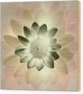 Shades Of A Daisy Wood Print