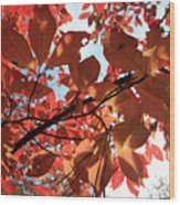 Shades Of Autumn Wood Print