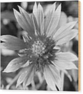 Shades Of Gray Flower By Earl's Photography Wood Print