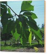 Shades Of Green 2 Wood Print