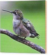 Shades Of Green - Ruby-throated Hummingbird Wood Print