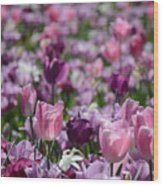 Days Of Wine And Tulips Wood Print