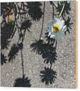 Shadow Daisy Wood Print