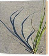 Shadow Grass Wood Print