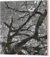 Shadow Moss Wood Print