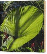 Shadow On A Ruffled Fan Palm Wood Print