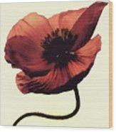 Shadow Poppy Wood Print