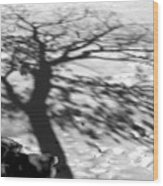Shadow Tree  Herrick Lake  Naperville Illinois Wood Print
