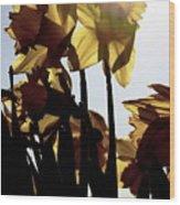 Shadowed Daffodils Wood Print