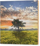 Shadows At Sunset After The Rain Wood Print