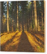 Shadows In Forrest  Wood Print