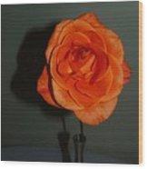 Shadows Of A Peach Rose Wood Print