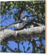 Shadowy Blue Jay Wood Print