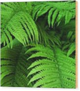 Shadowy Fern Wood Print