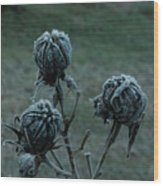 Shadowy Frozen Pods From The Darkside Wood Print