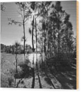 Shadowy Path Wood Print
