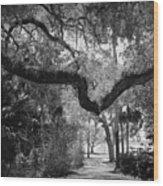 Shadowy Pathway Wood Print