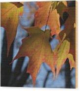 Shadowy Sugar Maple Leaves In Autumn Wood Print