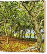 Shady Grove At Wai'anapanapa Wood Print