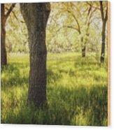 Shady Grove Wood Print