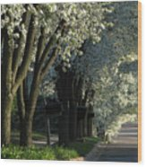 Shady Grove Wood Print