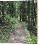 Shady Grove Path Wood Print