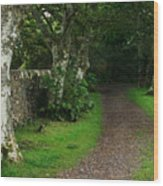 Shady Lane Wood Print by Warren Home Decor