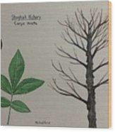 Shagbark Hickory Tree Id Wood Print