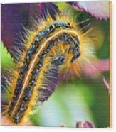 Shagerpillar Wood Print by Bill Tiepelman