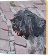 Shaggy Pup Abstract Wood Print
