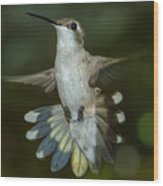 Shake Your Tail Feathers Wood Print