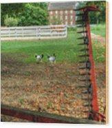 Shaker Chickens Wood Print
