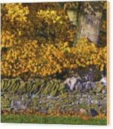 Shaker Stone Fence 4 Wood Print