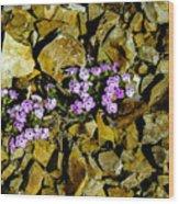 Shale Garden.  Wood Print