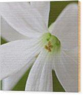 Shamrock Blossom Wood Print
