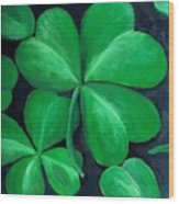 Shamrocks Wood Print